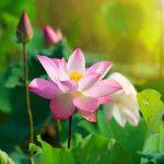 Mơ thấy hoa là điềm báo lành hay dữ? Đánh con gì may mắn nhất?