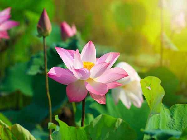 Giải mã giấc mơ thấy hoa có ý nghĩa gì?