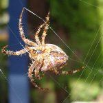 Nằm mơ thấy nhện có ý nghĩa gì có điềm báo tốt xấu thế nào